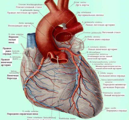 Открытый артериальный проток .